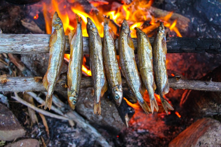 capelin-on-a-camp-fire