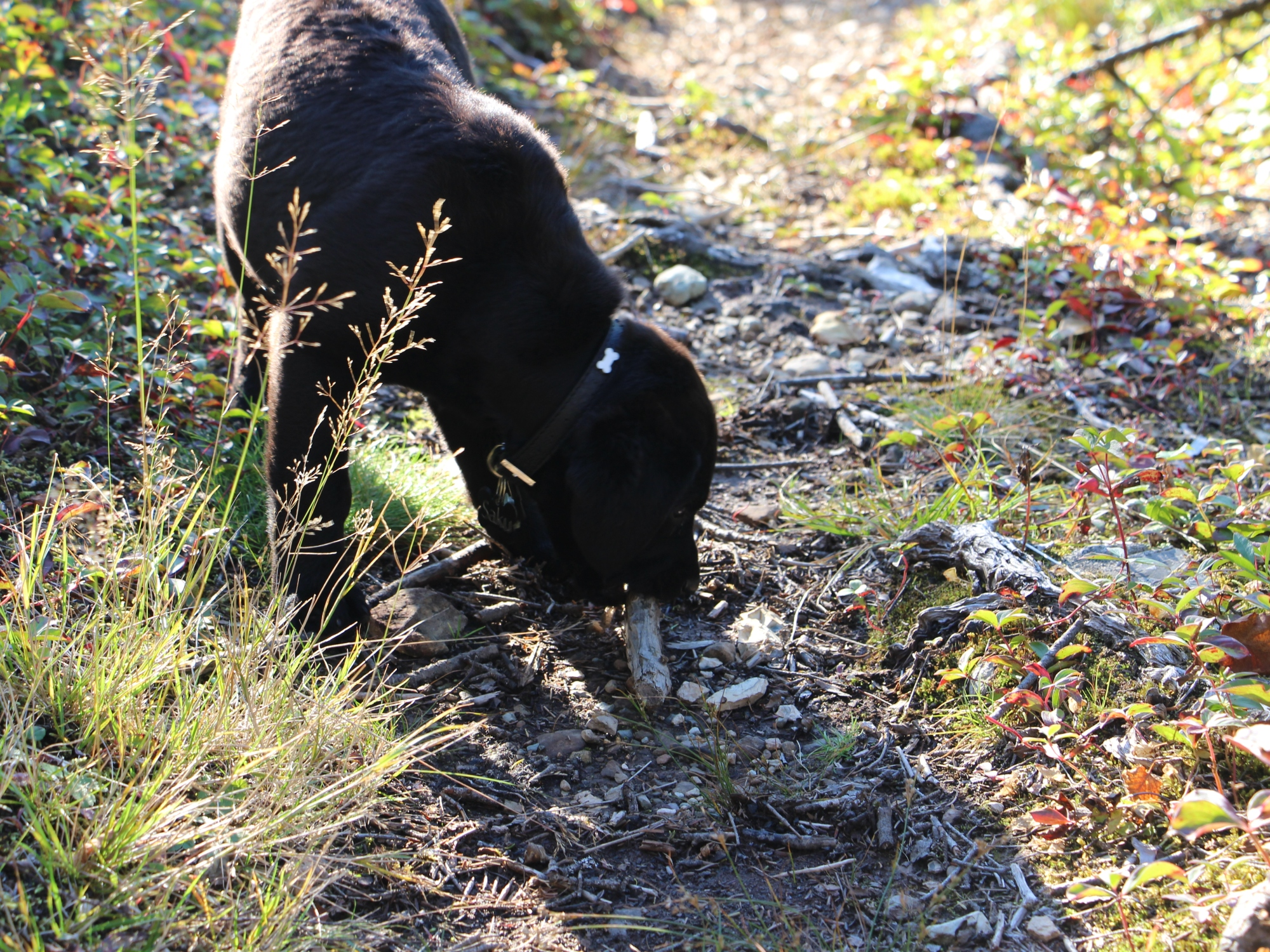 Cape Shore Water Dogs, Bough Beds and Leaving No Trace – NL EXPLORER